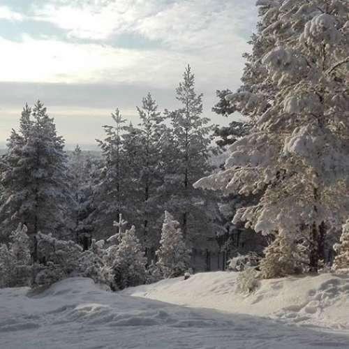 Hyvä keli hiihdellä.#harjureitti