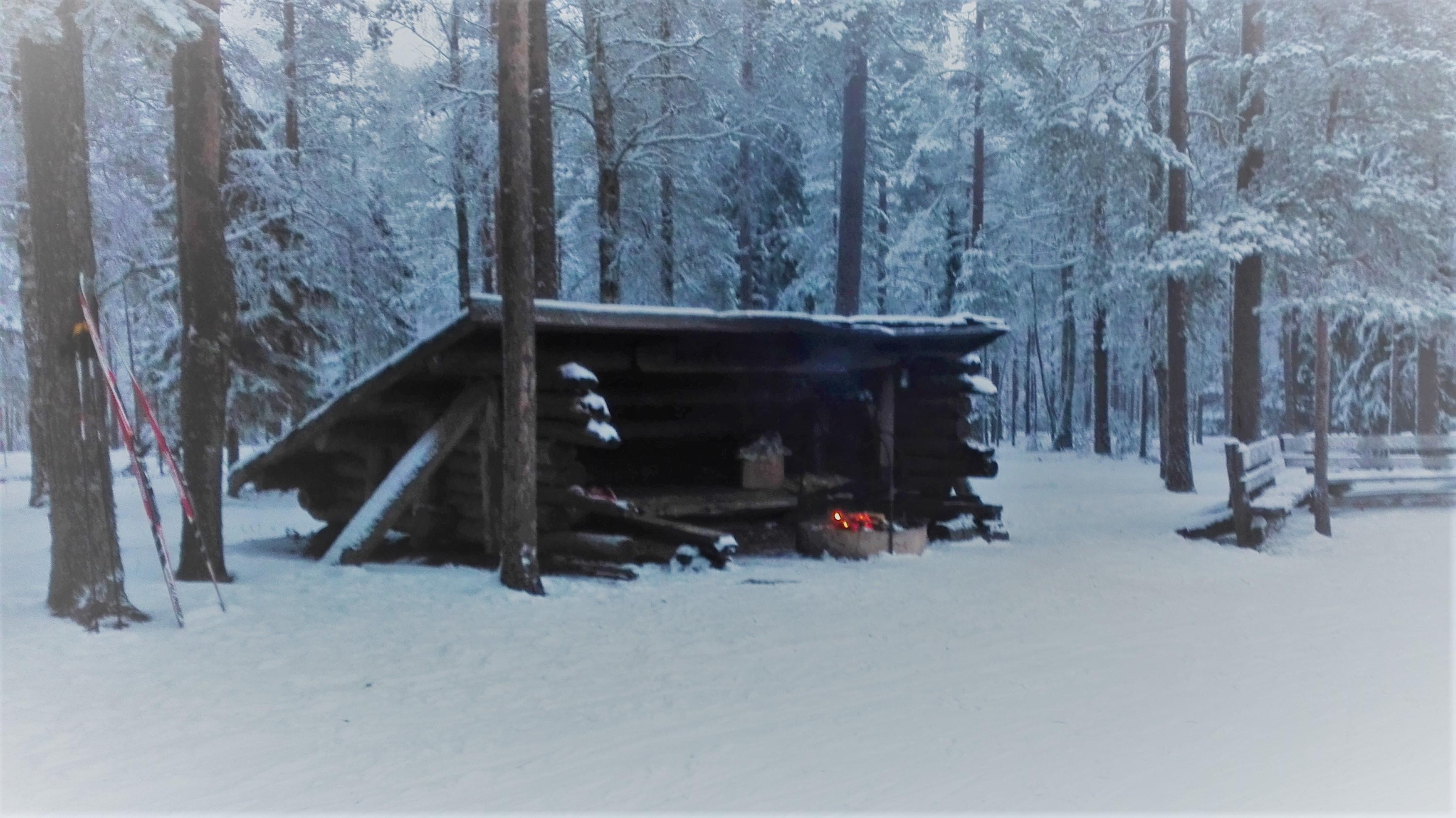 Luminen laavu metsässä.